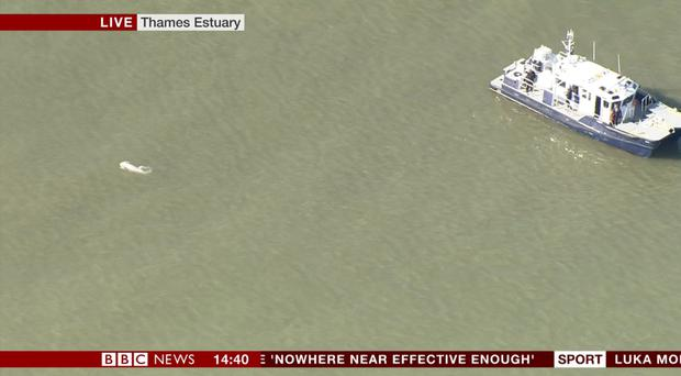 Beluga in the Thames (BBC)
