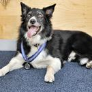 Police dog Mojo was first on the scene at the Manchester Arena bombing (Julian Brown/PDSA)