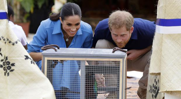 The Duke and Duchess of Sussex look at a parrot during a visit to dedicate a forest reserve to the Queen's Commonwealth Canopy, at Tupou College (Kirsty Wigglesworth/PA)