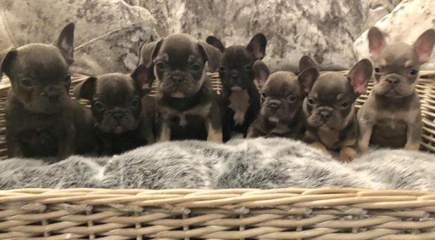 Essex Police is investigating a burglary in Loughton in which 11 puppies were taken. (Essex Police/ PA)