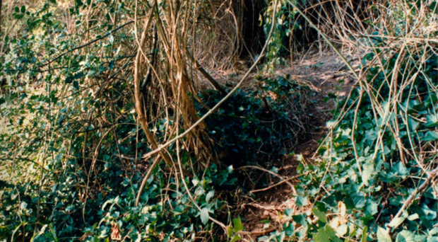 The woodland where the bodies of Karen Hadaway and Nicola Fellows were found in 1986