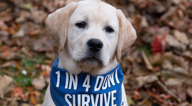The Scottish Government launched a campaign to combat puppy farmers (Scottish Government/PA)