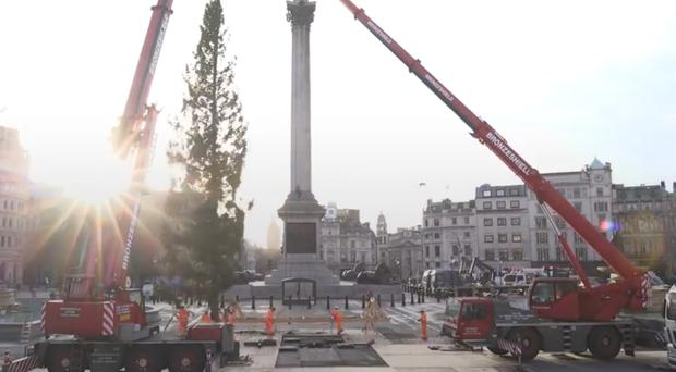 Trafalgar Square Christmas tree (PA)