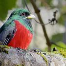 A Narina Trogon (University of Bristol/PA)