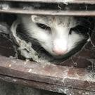 A cat was freed from a tumble dryer vent in Kidderminster by an RSPCA officer (RSPCA/ PA)