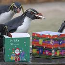Rockhopper penguins receive fishy treats in Christmas boxes at Whipsnade Zoo (Joe Giddens/PA)