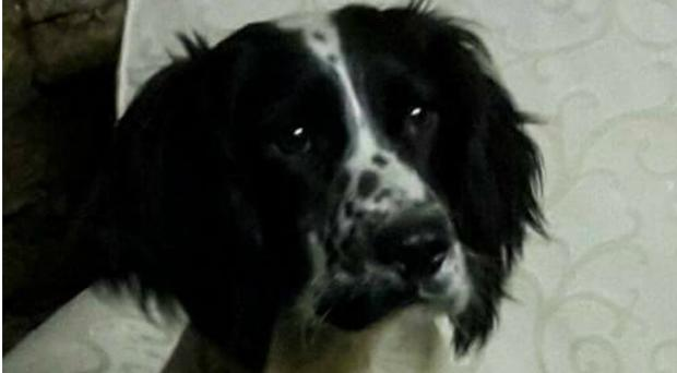 Belle had been missing for two years (Trisha Joseph/PA)