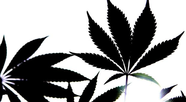 Cannabis has been a controlled substance in the UK since 1928 (Cathal McNaughton/PA)
