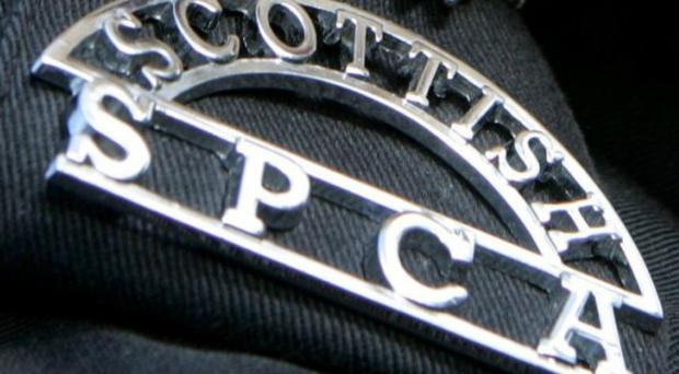 The Scottish SPCA is leading efforts to investigate the incident (Scottish SPCA/PA)