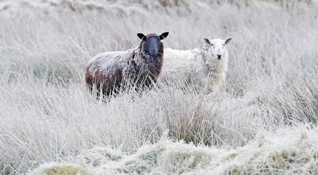 Parts of the country are set to be chilly on Tuesday (Niall Carson/PA)