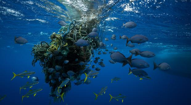 High seas wildlife is under threat from activities such as fishing, a report says (Justin Hofman/Greenpeace/PA)