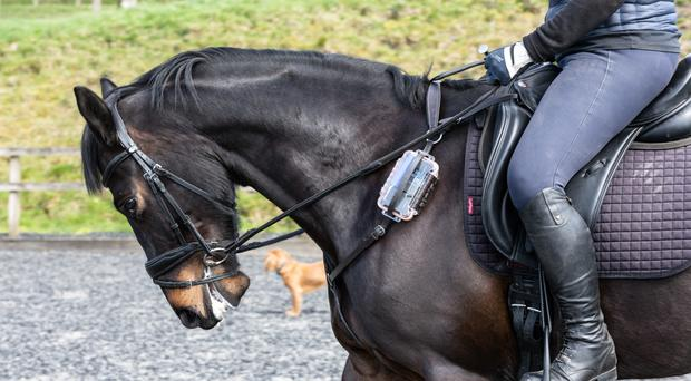 William the horse trials the innovative health tracker at Forest Lodge Stud near Wincanton, Somerset (University of Bath/PA)