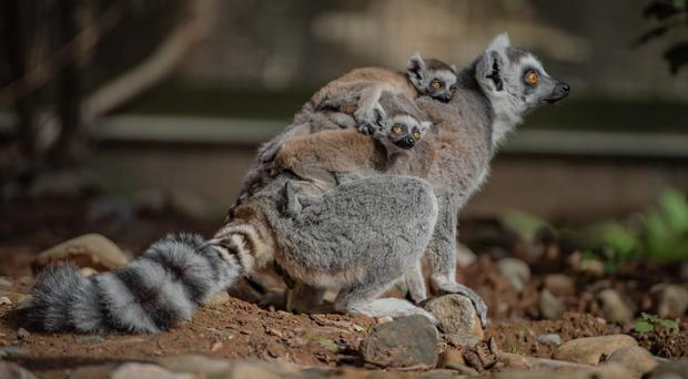 (Chester Zoo)