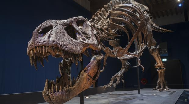 Trix weighs 5,000kg – the same as four Mini Coopers (Naturalis Biodiversity Centre/PA)