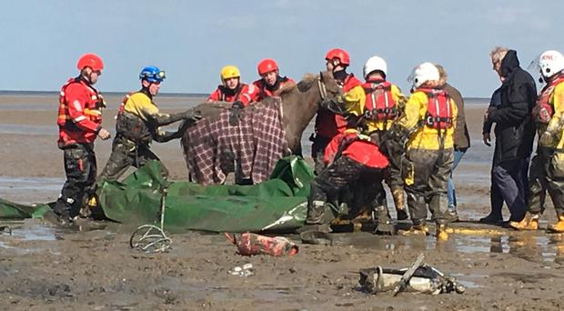 Coastguards and firefighters help rescue the horse stuck on Moreton Beach, Merseyside (RNLI/Chris Green)