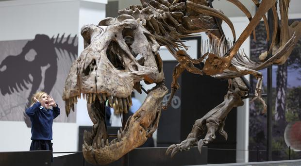 Trix the T-rex goes on show at Kelvin Hall in Glasgow on Thursday (Martin Shields/PA)