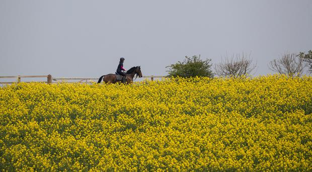 A horserider passes oilseed rape growing in a field close to Compton, near Newbury (Steve Parsons/PA)