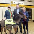 Digby the guide horse has been training on the Metro (Tyne and Wear Metro)