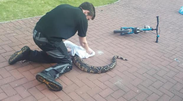 Bruce Baker said his children were 'blase' about finding the snake (Bruce Baker/PA)