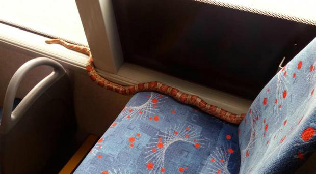 The snake was returned to its owner (McGill's Buses/PA)