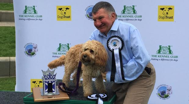 Holyrood Dog of the Year, a Cavapoo, with Jeremy Balfour MSP outside the Scottish Parliament (Tom Eden/PA)