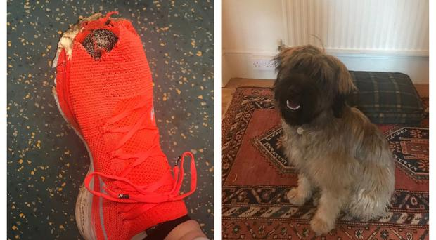 Simon Collins' trainers and the puppy that destroyed them (Simon Collins/PA)