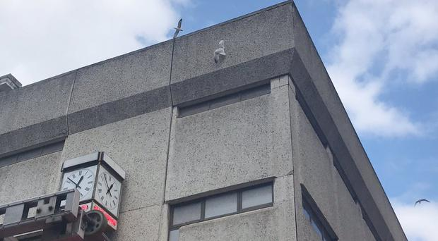 A seagull stuck to a building (RSPCA Frontline/PA)