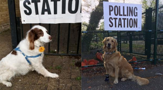 Dogs at polling stations (Hannah Whitehouse and Richard Walker)
