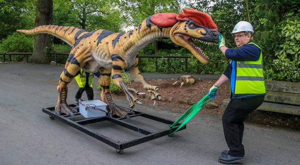A Dilophosaurus animatronic model is wheeled through Chester Zoo after arriving from the US (Peter Byrne/PA)