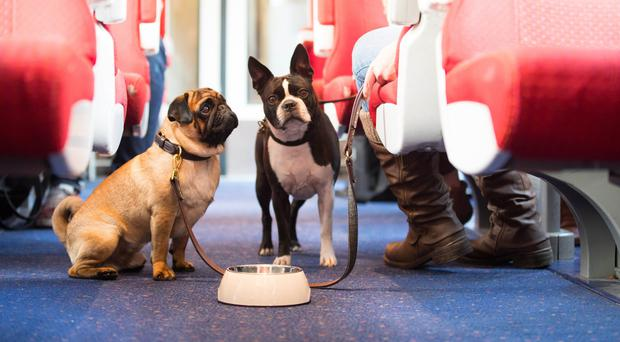 Butch Cassidy, a Pug, and Sacha, a Boston Terrier, travel by train (David Parry/PA)