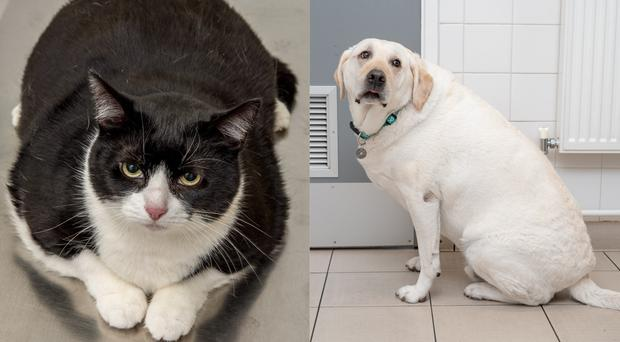 Two animals who are about to embark upon a journey of weight loss (PDSA/PA)