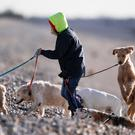 Surgeons say dog walkers are at risk of injuring their hands through the misuse of collars and leads (Andrew Matthews/PA)