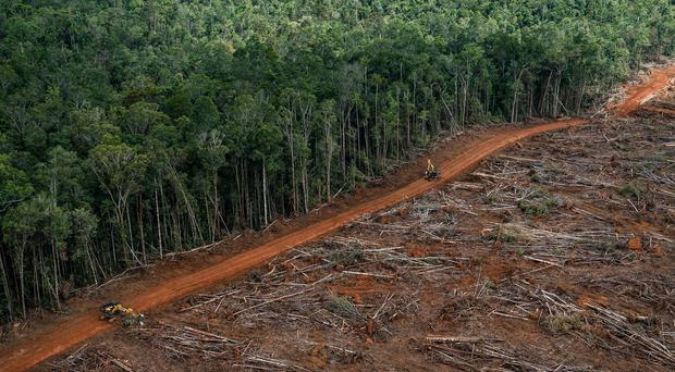 Forest being cleared for palm oil plantation in Papua, Indonesia (Ulet Ifansasti/Greenpeace/PA)