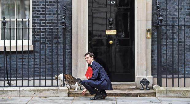 Secretary of State for International Development Rory Stewart with the Number 10 cat Larry (David Mirzoeff/PA)