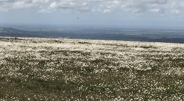 Cotton grass is blooming on a landscape hit by wildfires last year (Andy Bond/WTML/PA)
