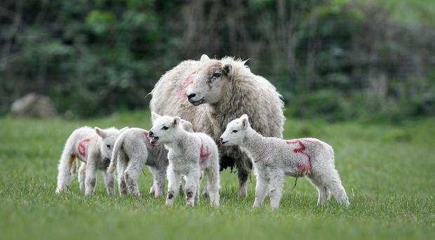 The UK is the second largest producer of sheep meat in the world (Ben Birchall/PA)