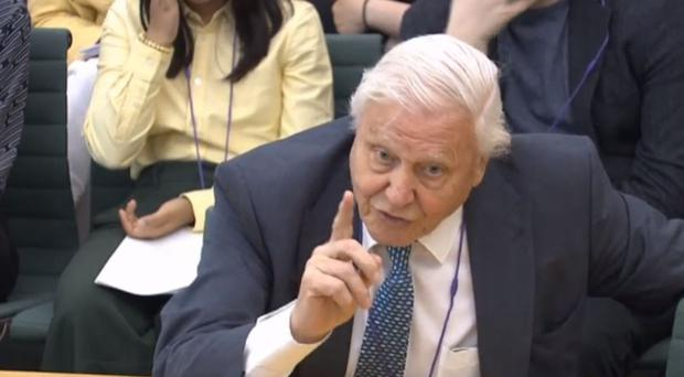 Sir David Attenborough was questioned by MPs (House of Commons/PA)