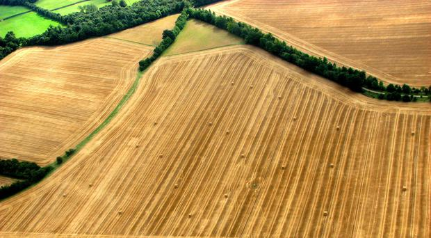 Scientists say freeing up areas currently used to grow crops and keep livestock could also aid conservation efforts and improve biodiversity (Ian Nicholson/PA)