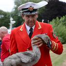 The Queen's Swan Marker, David Barber, holds a cygnet near Dumsey Meadow in Surrey (Jonathan Brady/PA)