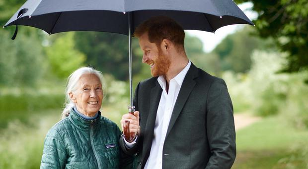 The Duke of Sussex and Dr Jane Goodall (Chris Allerton)