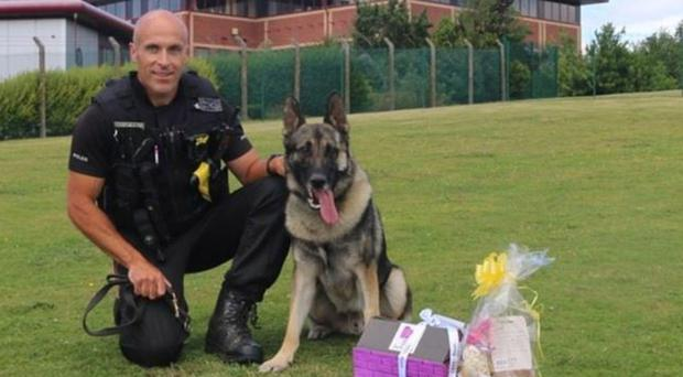 Police dog Audi, pictured after the stabbing (Staffordshire Police/PA)