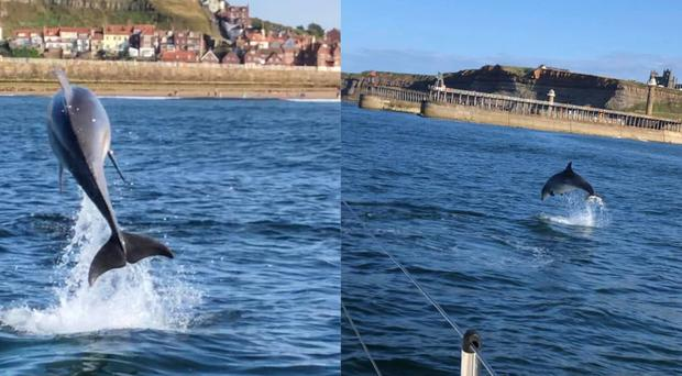 Dolphins spotted off the coast of Whitby (Chris Guy)
