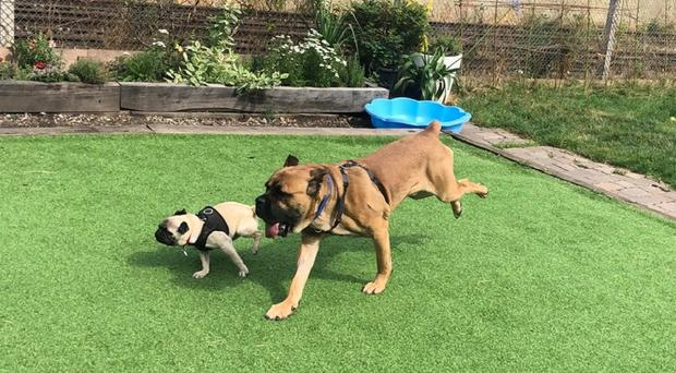 Pancake and Fraser became the best of friends (Battersea Dogs and Cats Home/PA)