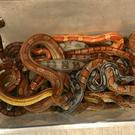 A box of snakes left outside a vet's (RSPCA)