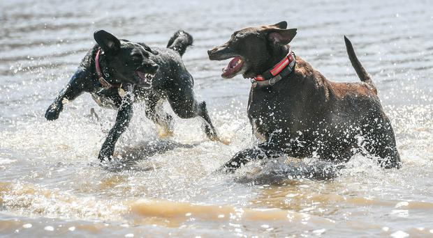 The record heat, coupled with wet weather has created the 'perfect' environment for fleas to thrive (Ben Birchall/PA)