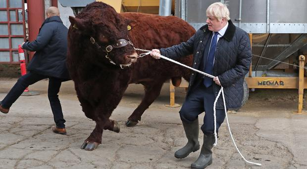 Boris Johnson grapples with a bull on his trip to Aberdeenshire (Andrew Milligan/PA)
