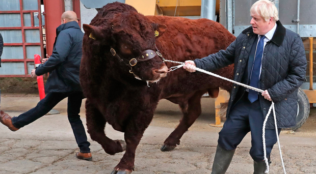 A plainclothes officer is sent flying as PM Boris Johnson tries to control a bull at a farm in Scotland