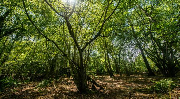 Broadwells Wood in Warwickshire is among the ancient woodland that will be affected by HS2 (Phil Formby/Woodland Trust/PA)