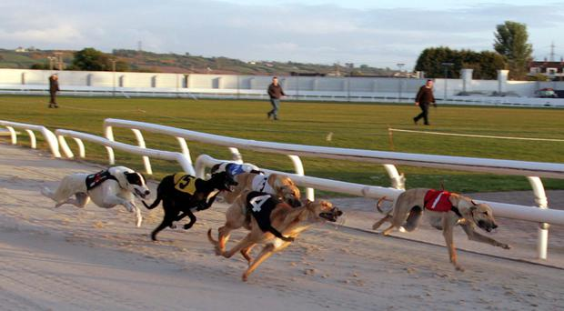 The reformed Drumbo Greyhound Stadium at Ballyskeagh will hold its first Sunday programme this weekend since reopening in July