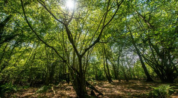 Broadwells Wood in Warwickshire, one of the woodlands where work has been deferred (Phil Formby/Woodland Trust/PA)